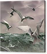 Terns Feasting At Sea Canvas Print