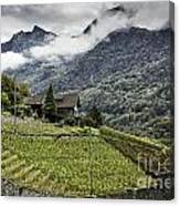 Terraced Vineyard Canvas Print