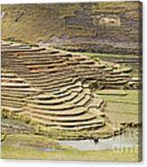 Terraces And Paddy Fields Canvas Print