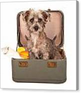 Terrier Dog In Suitcase Canvas Print