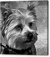 Terrier - Dog - Playing With Light Canvas Print