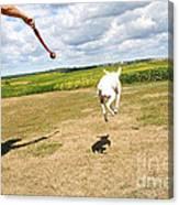 Terrier Levitation Canvas Print
