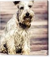 Terrier On Deck Canvas Print
