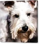 Terrier Upclose Canvas Print