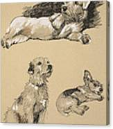 Terriers, 1930, Illustrations Canvas Print