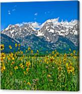 Teton Peaks And Flowers Canvas Print