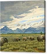 Tetons-buffalo  Canvas Print