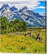Tetons In The Spring Canvas Print