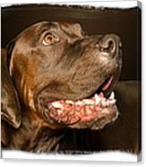 Tex The Dog Canvas Print