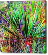 Texas Agave Pee Wee Plant Canvas Print