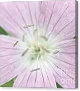 Texas Baby Blue Eyes Nemophila Phacelioides Canvas Print