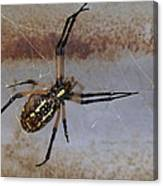 Texas Barn Spider In Web 3 Canvas Print