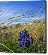 Texas Bluebonnet Center Of Attention Canvas Print