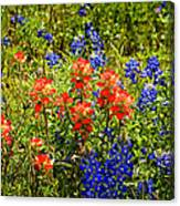 Texas Bluebonnets And Red Indian Paintbrush Canvas Print