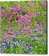 Texas Bluebonnets And Wildflowers Canvas Print