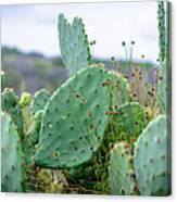 Texas Cactus Canvas Print