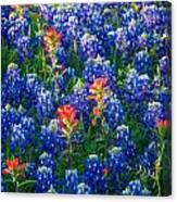 Texas Colors Canvas Print