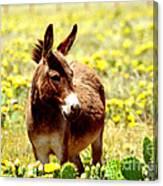 Texas Donkey In Yellow Cacti Canvas Print