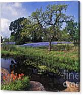 Texas Hill Country - Fs000056 Canvas Print