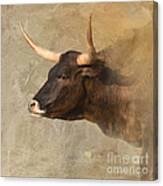 Texas Longhorn # 3 Canvas Print