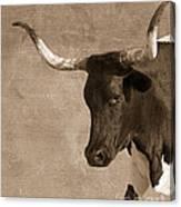 Texas Longhorn #6 Canvas Print