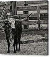 Texas Longhorn Black And White Canvas Print