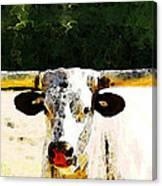 Texas Longhorn - Bull Cow Canvas Print
