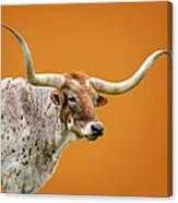 Texas Longhorn Steer Canvas Print