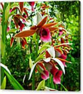 Texas Orchids Canvas Print
