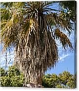 Texas Palm Canvas Print