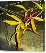 Texas Star Leaf Canvas Print