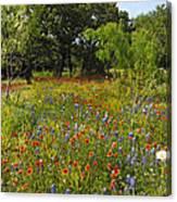 Texas Wildflower Medley Canvas Print
