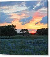 Texas Wildflower Sunset  Canvas Print