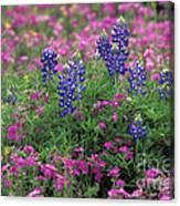 Texas Wildflowers 3 - Fs000930 Canvas Print