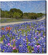 Texas Wildflowers Images - Bluebonnets 2 Canvas Print