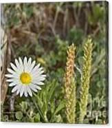 Texas Wildflowers V5 Canvas Print