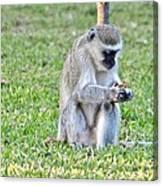 Texting Monkey Canvas Print