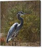 Textured Blue Heron Canvas Print