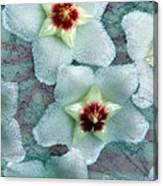 Textured Hoya Canvas Print