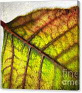 Textured Leaf Abstract Canvas Print