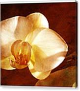 Textured Orchid Canvas Print