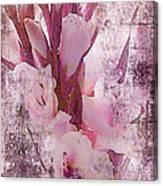 Textured Pink Gladiolas Canvas Print