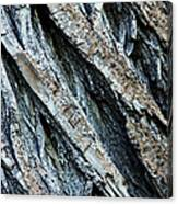 Textured Tree Bark Canvas Print