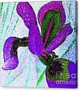 Textured Wild Purple Iris Canvas Print