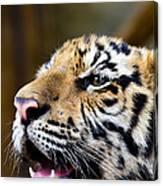 Thai Bengal Tiger Canvas Print
