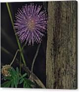 Thailand  Purple Wild Flowers Canvas Print