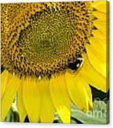 Thank God For Sunflowers Canvas Print