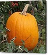 Thanksgiving Harvest Canvas Print