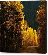 The Golden Road Canvas Print