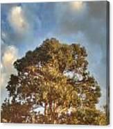 That Peaceful Tree Again Canvas Print
